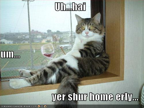 cat-drinking-wine