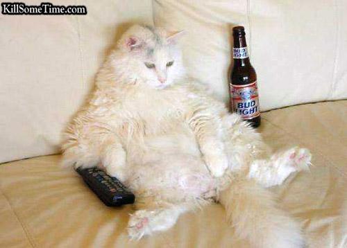 Drunk Cat (1)