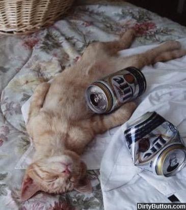 drunk cat