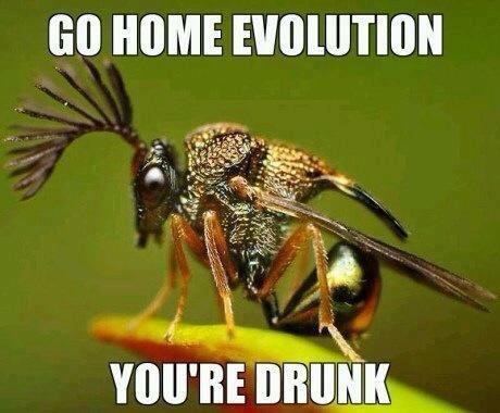 go home evolution, you're drunk
