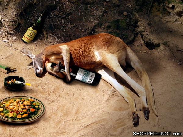 drunk-kangaroo-shopped-or-not