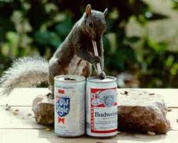 squirrel drinking bd