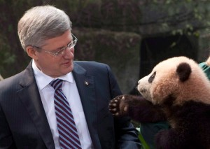 stephen harper with a bear