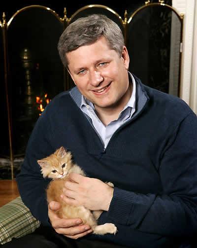 Stephen Harper with a kitten