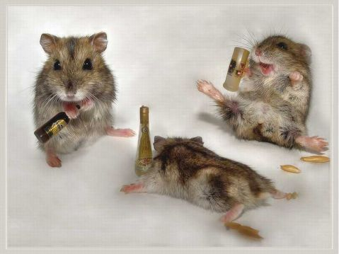 Funny Drunk Animals_