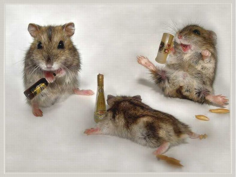 Funny Drunk Animals_