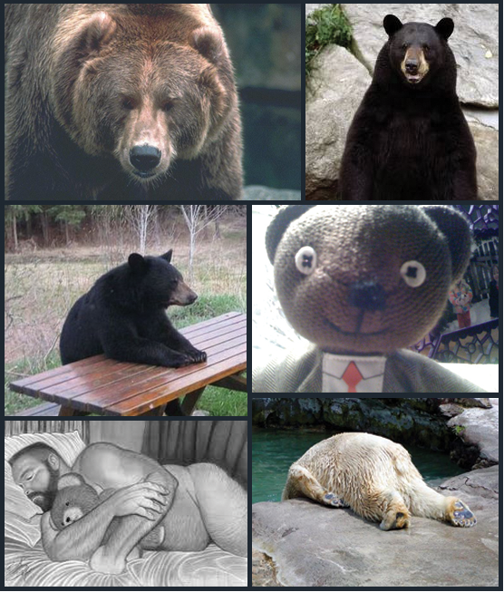 Bear collage