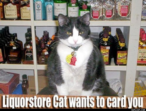 Liquor_Store_Cat_Wants_To_Card_You
