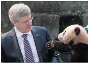 OMG, the panda wants to shake Harper's hand.