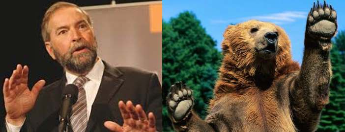 Check it out—he's a Mulcair Bear. Get it?