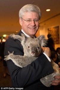 pm-harper-koala-bear