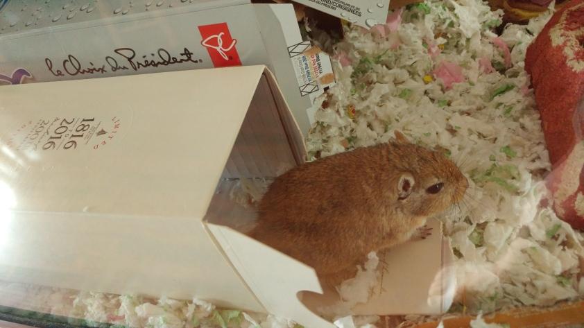 Cocoa with Laguvulin box
