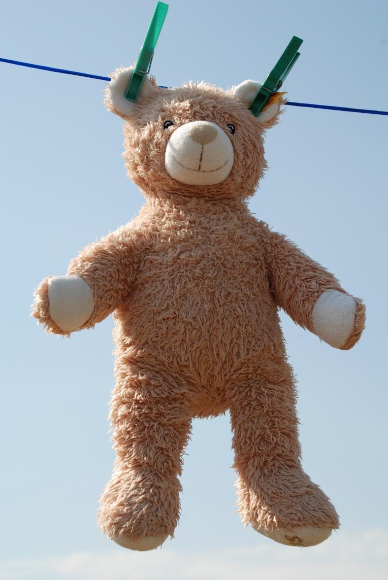 Teddy-online