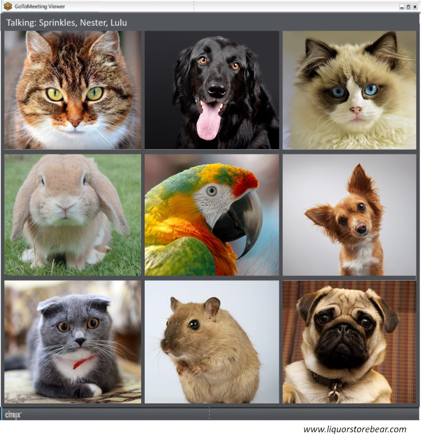 C2025 Conference call with pets
